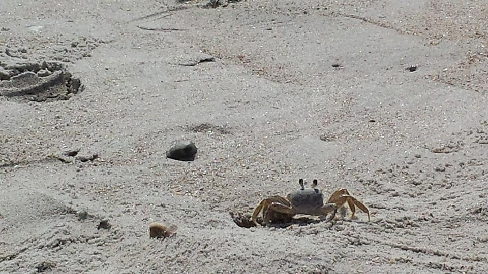 The Ghost Crab