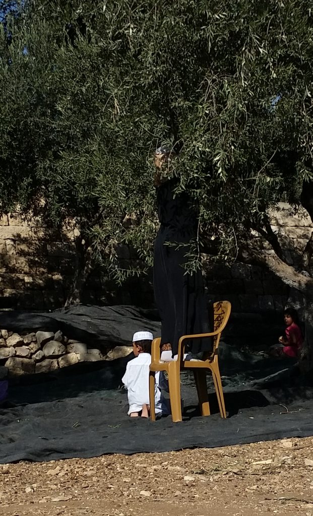 Hard to see, but a young Muslim woman is on the chair and picking olives (?) from the tree to feed her son, dressed in white, and her husband, who was sitting under another tree nearby.